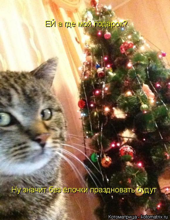 Котоматрица: ЕЙ а где мой подарок? Ну значит без ёлочки праздновать будут