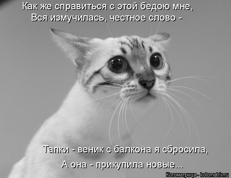 Котоматрица: Как же справиться с этой бедою мне, Вся измучилась, честное слово -  Тапки - веник с балкона я сбросила,  А она - прикупила новые...