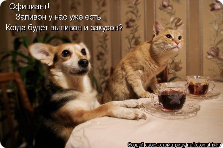 Котоматрица: Официант! Запивон у нас уже есть. Когда будет выпивон и закусон?