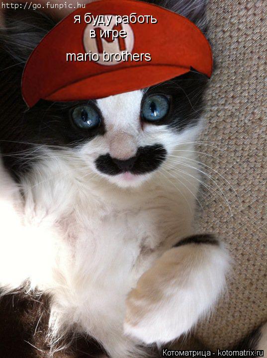 Котоматрица: я буду работь  в игре mario brothers