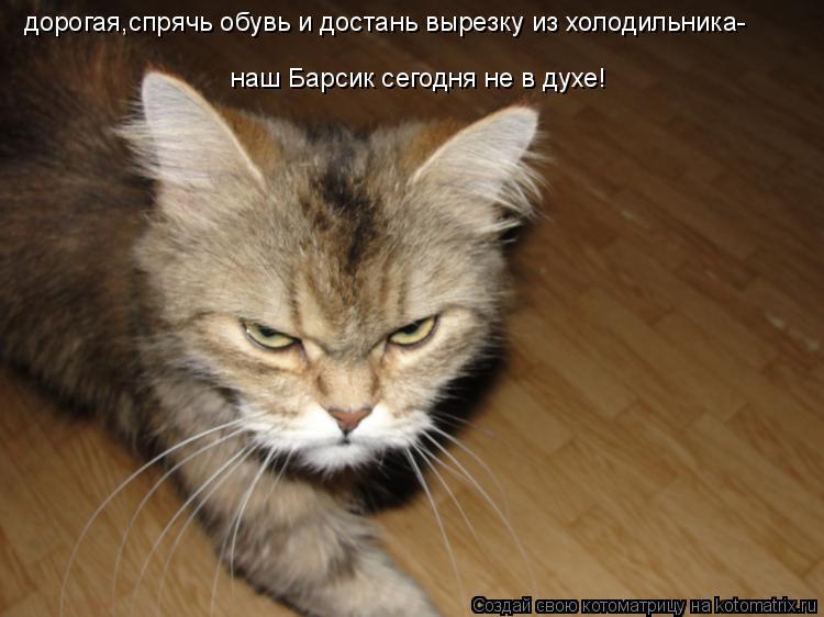 Котоматрица: дорогая,спрячь обувь и достань вырезку из холодильника- наш Барсик сегодня не в духе!
