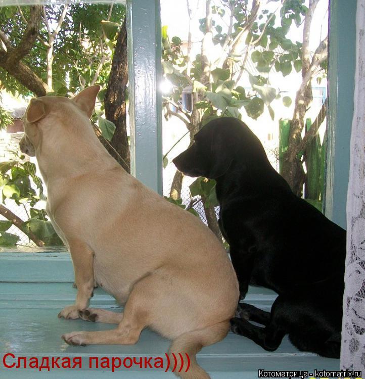 Котоматрица: Сладкая парочка))))