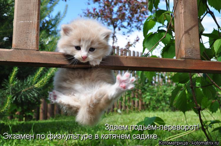 Котоматрица: Экзамен по физкультуре в котячем садике Здаем подьём-переворот!