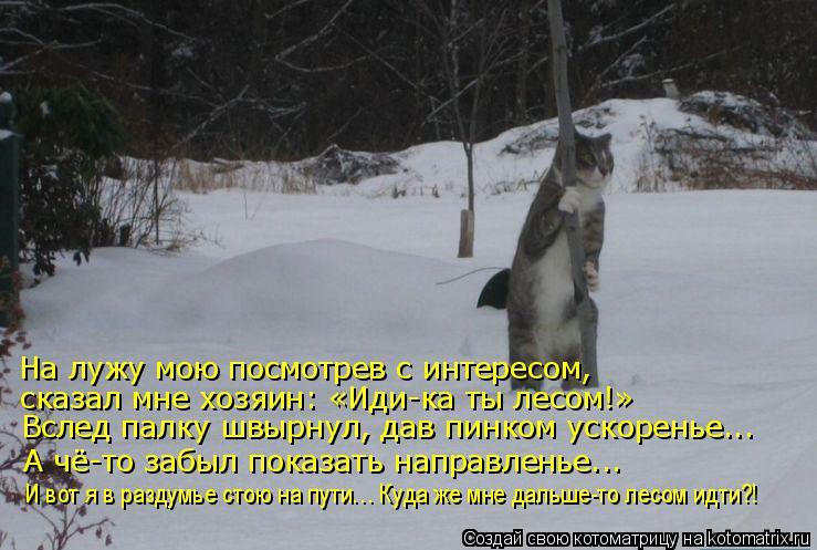 Котоматрица: На лужу мою посмотрев с интересом, сказал мне хозяин: «Иди-ка ты лесом!» Вслед палку швырнул, дав пинком ускоренье... А чё-то забыл показать на
