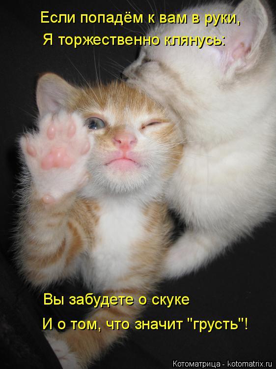 """Котоматрица: Если попадём к вам в руки, Я торжественно клянусь: Вы забудете о скуке И о том, что значит """"грусть""""!"""