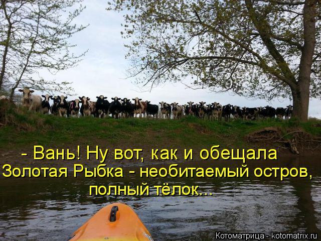 Котоматрица: - Вань! Ну вот, как и обещала Золотая Рыбка - необитаемый остров, полный тёлок...