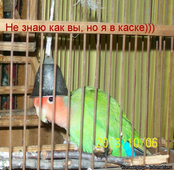 Котоматрица: Не знаю как вы, но я в каске)))