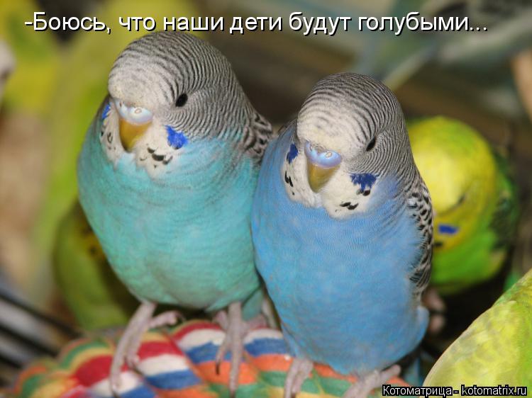 Котоматрица: -Боюсь, что наши дети будут голубыми...