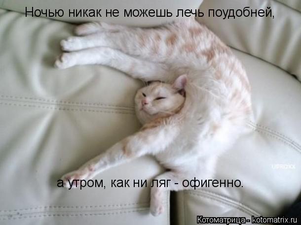 Котоматрица: Ночью никак не можешь лечь поудобней, а утром, как ни ляг - офигенно.