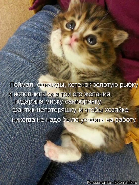 Котоматрица: Поймал, однажды, котенок золотую рыбку и исполнила она три его желания: подарила миску-самобранку, фантик-непотеряшку, и чтобы хозяйке нико