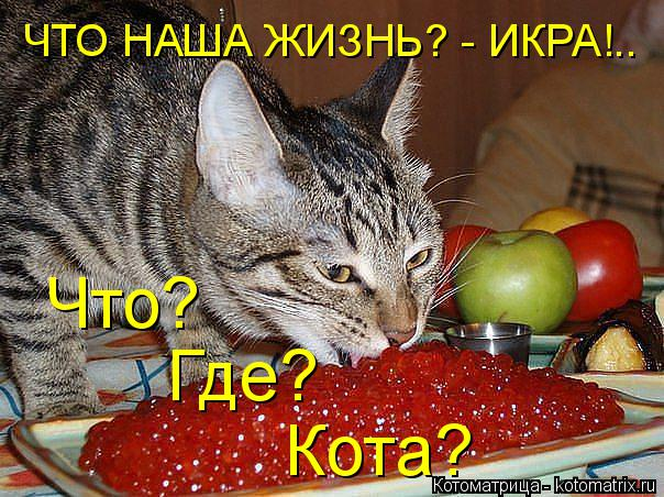 Котоматрица: ЧТО НАША ЖИЗНЬ? - ИКРА!.. Что? Где? Кота?