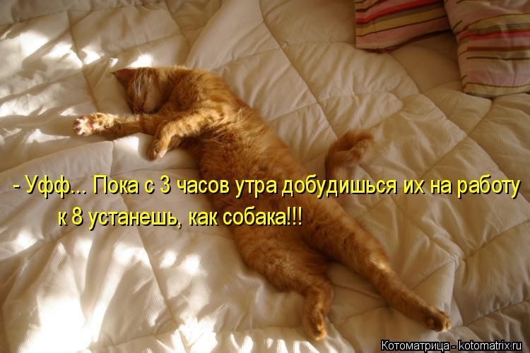 Котоматрица: - Уфф... Пока с 3 часов утра добудишься их на работу  к 8 устанешь, как собака!!!
