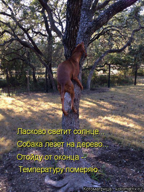 Котоматрица: Ласково светит солнце... Собака лезет на дерево... Отойду от оконца - Температуру померяю.