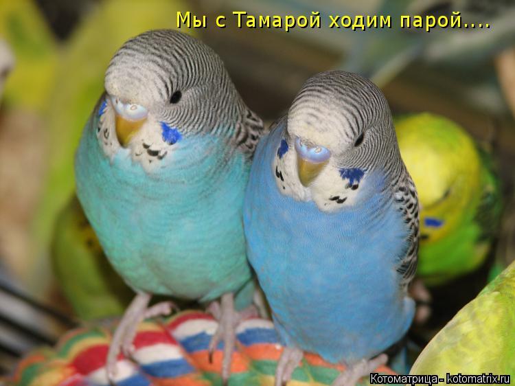 Котоматрица: Мы с Тамарой ходим парой....