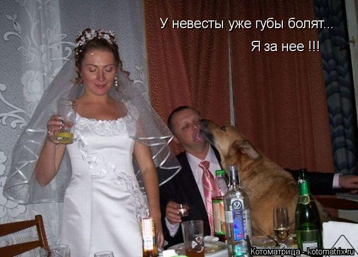 Котоматрица: У невесты уже губы болят... Я за нее !!!
