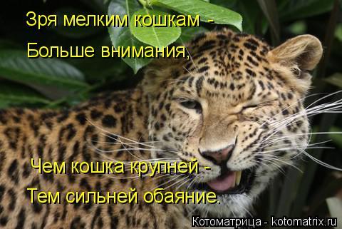 Котоматрица: Зря мелким кошкам Больше внимания, Чем кошка крупней - Тем сильней обаяние. -