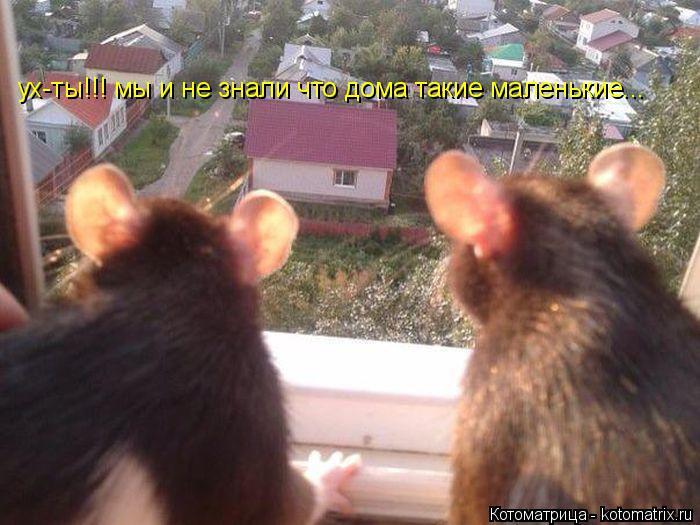 Котоматрица: ух-ты!!! мы и не знали что дома такие маленькие...