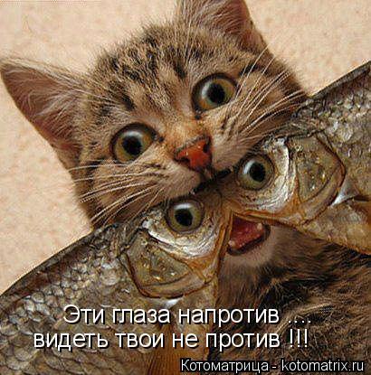 Котоматрица: Эти глаза напротив .... видеть твои не против !!!