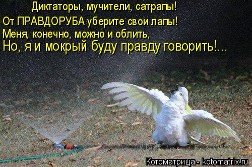 Котоматрица: Диктаторы, мучители, сатрапы! От ПРАВДОРУБА уберите свои лапы! Меня, конечно, можно и облить, Но, я и мокрый буду правду говорить!...