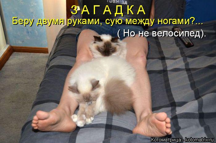 Котоматрица: З А Г А Д К А Беру двумя руками, сую между ногами?... ( Но не велосипед).