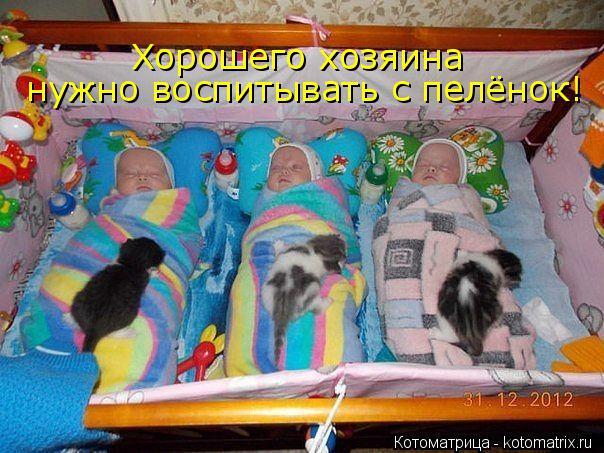 Котоматрица: Хорошего хозяина   нужно воспитывать с пелёнок!