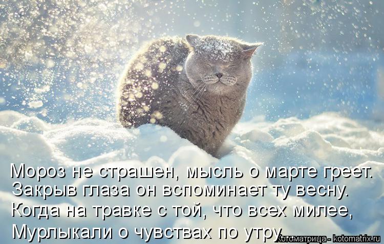 Котоматрица: Мороз не страшен, мысль о марте греет. Закрыв глаза он вспоминает ту весну. Когда на травке с той, что всех милее, Мурлыкали о чувствах по утр