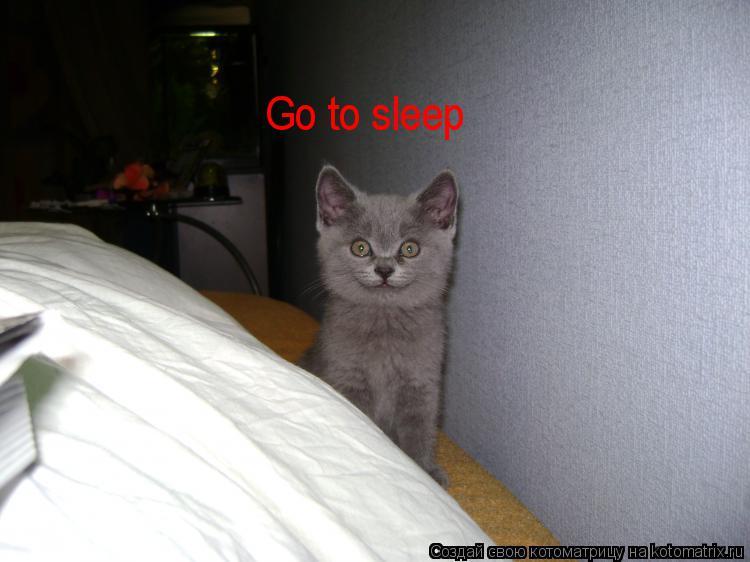 Котоматрица: Go to sleep