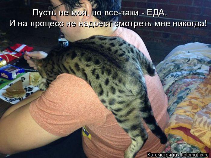 Котоматрица: И на процесс не надоест смотреть мне никогда! Пусть не моя, но все-таки - ЕДА.