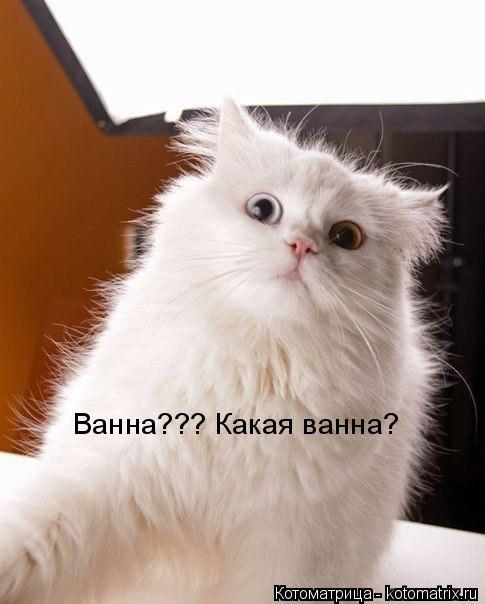 Котоматрица: Ванна??? Какая ванна?