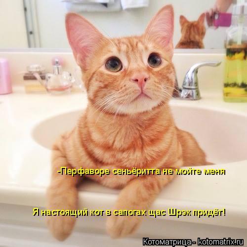 Котоматрица: -Перфаворе сеньёритта не мойте меня Я настоящий кот в сапогах щас Шрэк придёт!