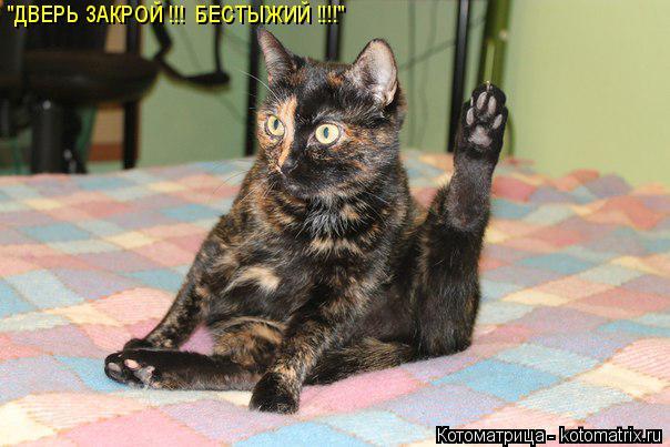 """Котоматрица: """"ДВЕРЬ ЗАКРОЙ !!!  БЕСТЫЖИЙ !!!!"""""""