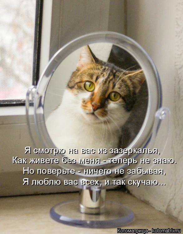 Котоматрица: Я смотрю на вас из зазеркалья, Как живете без меня - теперь не знаю. Но поверьте - ничего не забывая, Я люблю вас всех, и так скучаю...