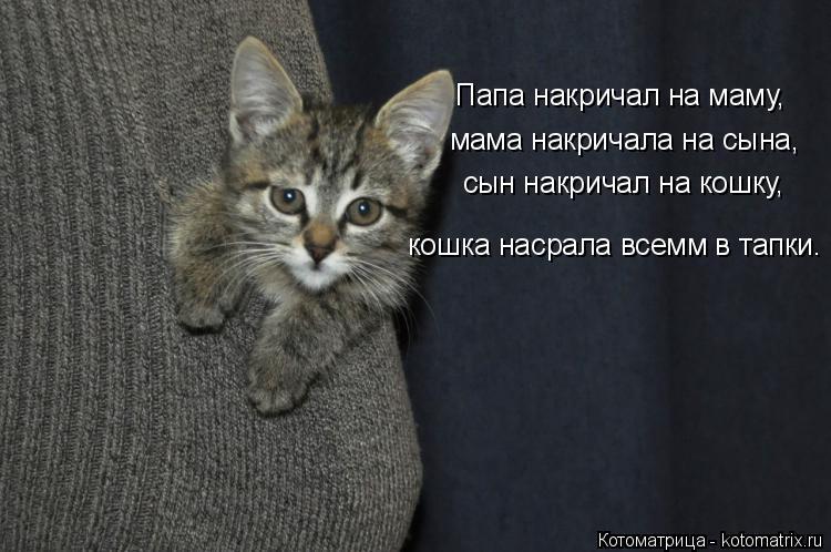 Котоматрица: Папа накричал на маму,  мама накричала на сына, сын накричал на кошку, кошка насрала всемм в тапки.