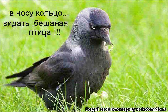 Котоматрица: в носу кольцо... видать ,бешаная  птица !!!
