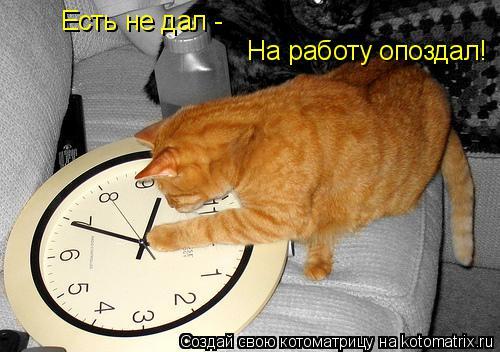 Котоматрица: Есть не дал -  На работу опоздал!