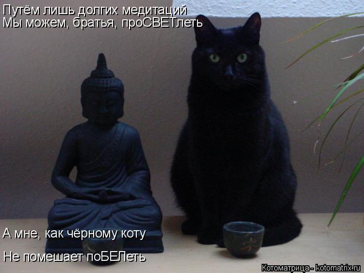 Котоматрица: Путём лишь долгих медитаций Мы можем, братья, проСВЕТлеть А мне, как чёрному коту Не помешает поБЕЛеть