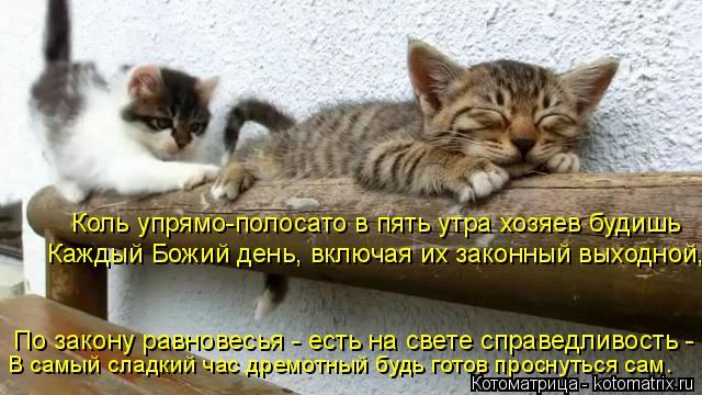 Котоматрица: Коль упрямо-полосато в пять утра хозяев будишь Каждый Божий день, включая их законный выходной, По закону равновесья - есть на свете справед