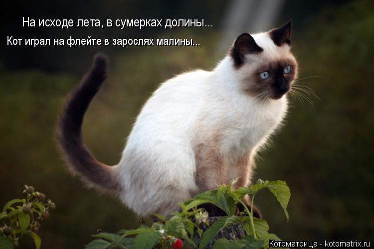 Котоматрица: На исходе лета, в сумерках долины... Кот играл на флейте в зарослях малины...