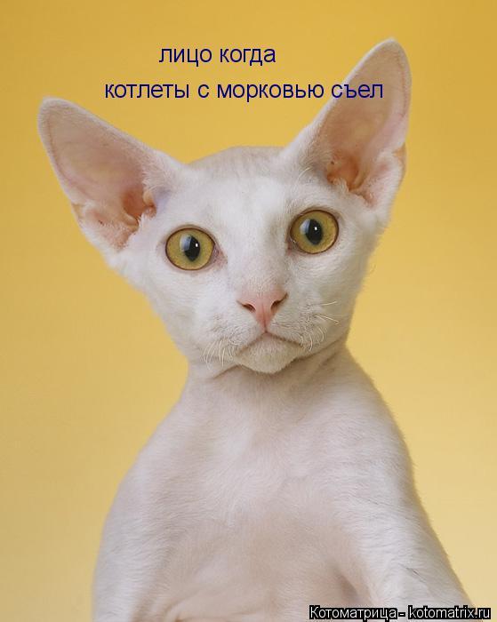 Котоматрица: лицо когда лицо когда котлеты с морковью съел