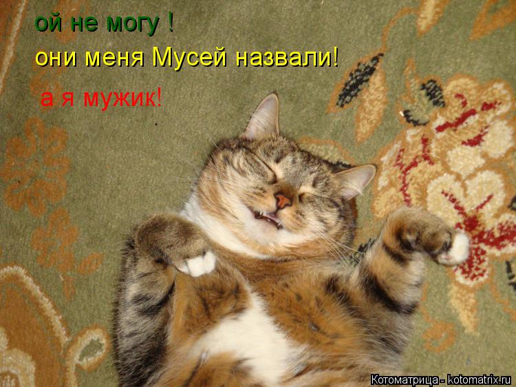 Котоматрица: ой не могу ! они меня Мусей назвали! а я мужик!