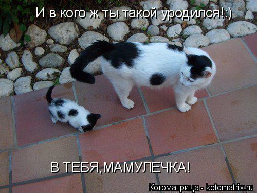 Котоматрица: И в кого ж ты такой уродился!:) В ТЕБЯ,МАМУЛЕЧКА!
