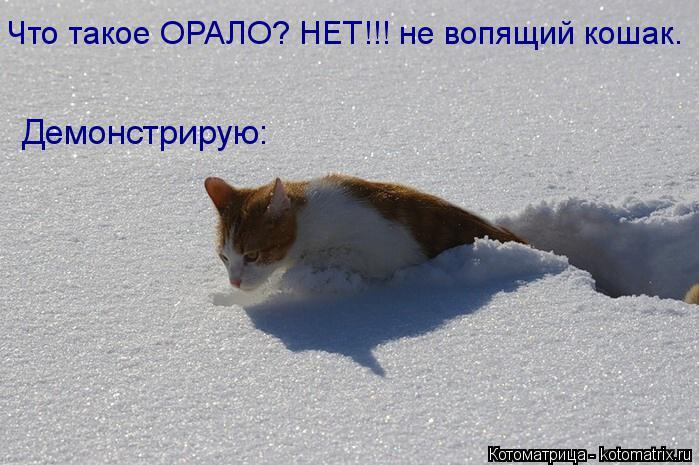 Котоматрица: Демонстрирую: Что такое ОРАЛО? НЕТ!!! не вопящий кошак.