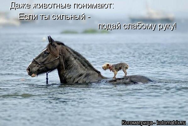 Котоматрица: Даже животные понимают: Если ты сильный -  подай слабому руку!