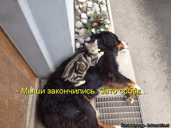 Котоматрица: - Мыши закончились. Зато собак...