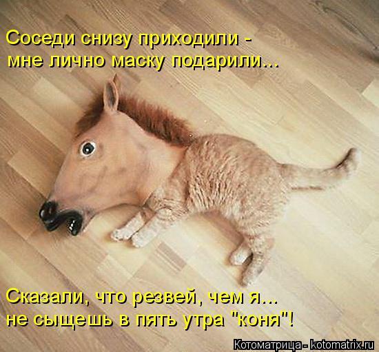 """Котоматрица: Соседи снизу приходили - мне лично маску подарили... Сказали, что резвей, чем я... не сыщешь в пять утра """"коня""""!"""