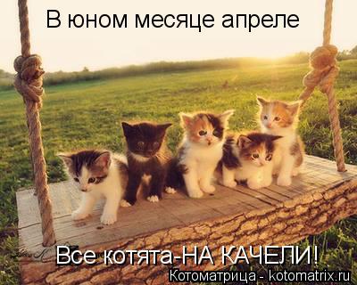 Котоматрица: В юном месяце апреле Все котята-НА КАЧЕЛИ!