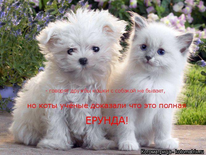 Котоматрица: - говорят дружбы кошки с собакой не бывает, но коты учёные доказали что это полная  ЕРУНДА!