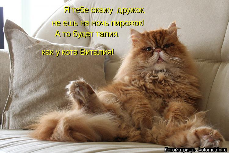 Котоматрица: Я тебе скажу  дружок, не ешь на ночь пирожок! А то будет талия, как у кота Виталия!