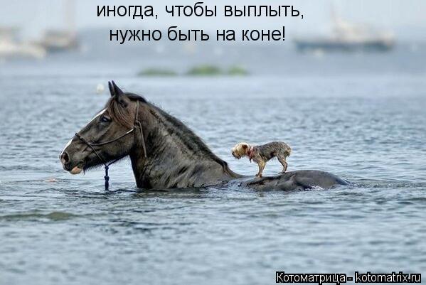 Котоматрица: иногда, чтобы выплыть, нужно быть на коне!