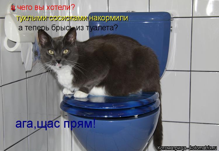 Котоматрица: а чего вы хотели? тухлыми сосисками накормили а теперь брысь из туалета? ага,щас прям!